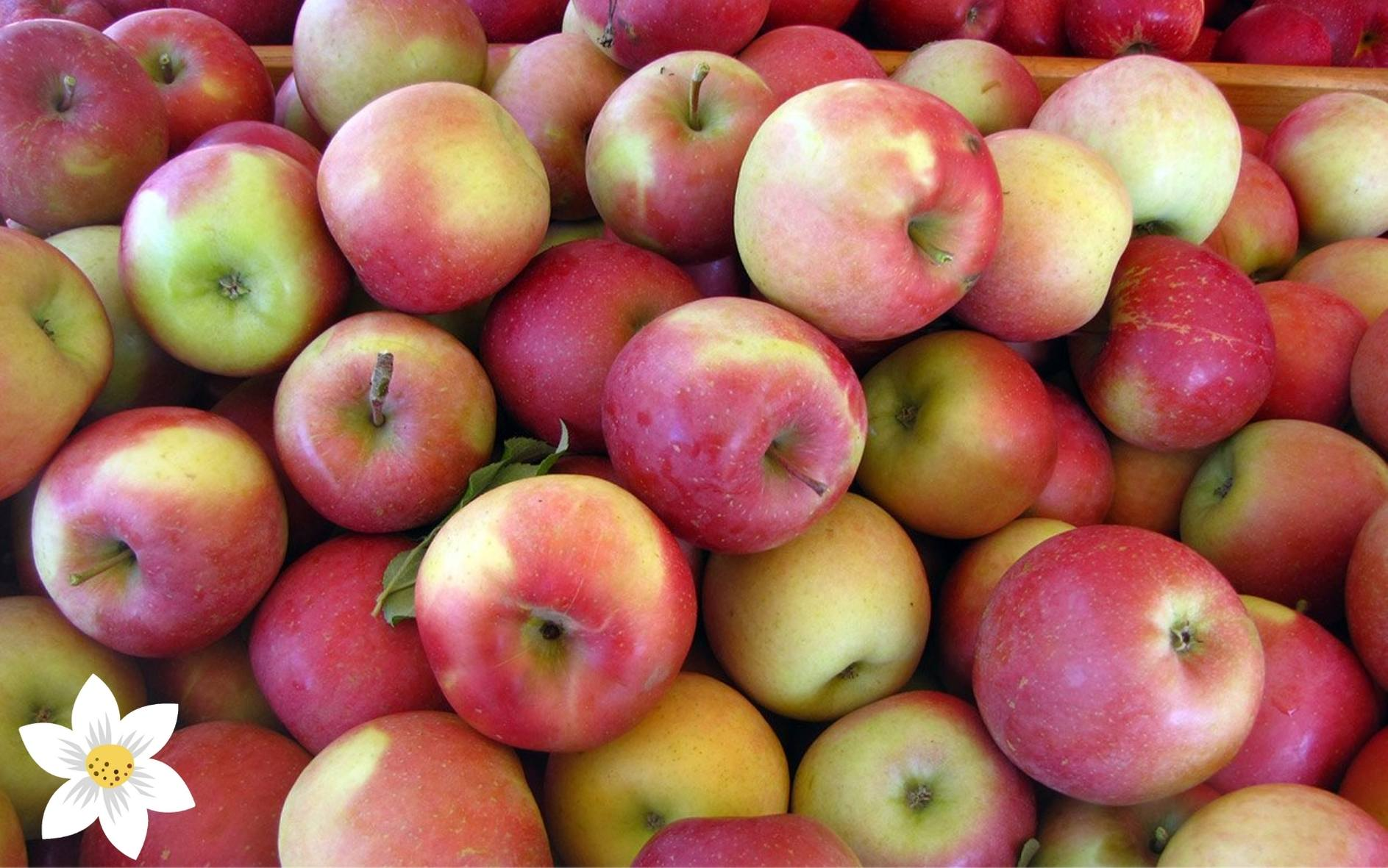 Frutta e Verdura Foto Listino Impaginate 16_9 (7)